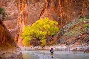 Four Season Guides - guided camping & hiking trips :: We'll show you the hidden wonders and natural treasures of Zion, Bryce, Arches & Canyonlands Nat'l Parks, plus the Escalante & Grand Staircase region. Camp & lodge options.