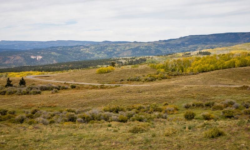 Dixie National Forest near Boulder Utah