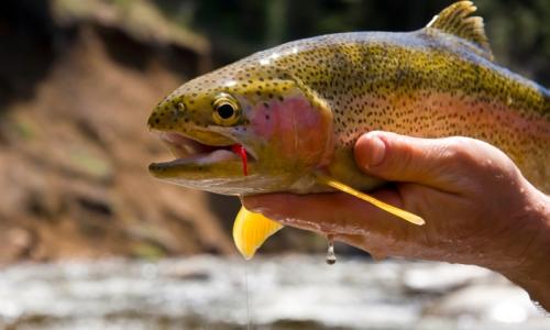 Bryce Canyon National Park Fishing Guides