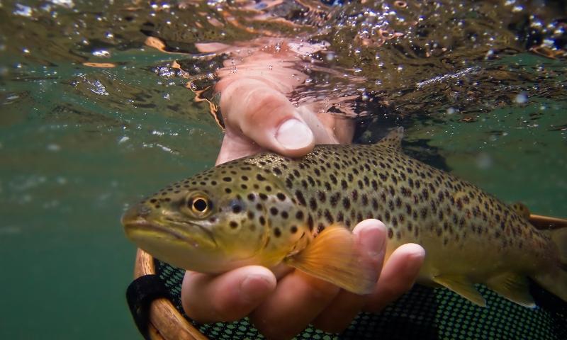 Bryce Canyon Fishing Guides