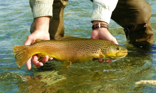 Bryce Canyon Fly Fishing Guides